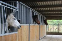 Récupération de vos chevaux de courses, pensez aux Ecuries de la Hallerie.