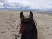 NOUS PROPOSONS DES BALADES TOUTE L' ANNEE à poney et à cheval  sur réservation